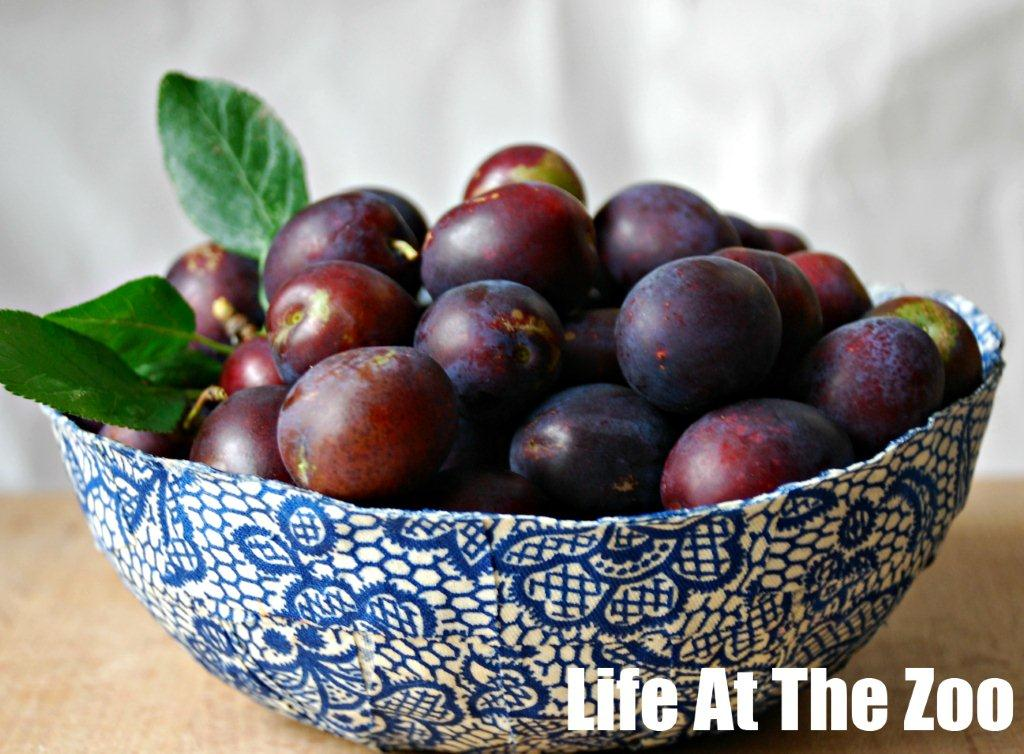 plums foraging