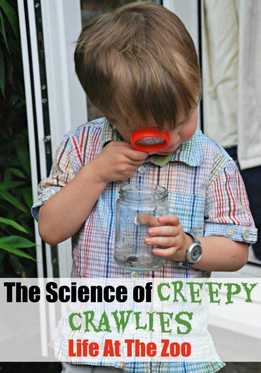 Creepy Crawlies Science at Home